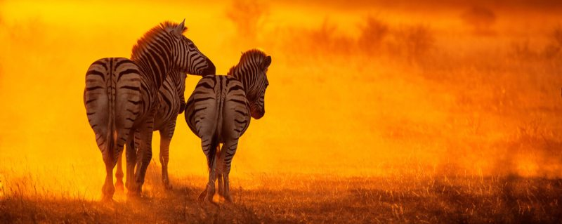 Luxury Zambia safari trips will take you to a sun-drenched safari paradise.
