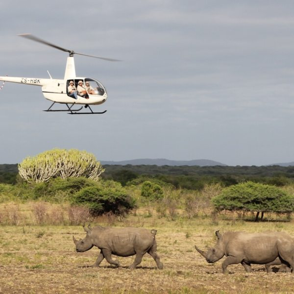 Rhinos Without Borders | Art Of Safari
