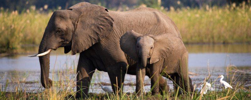Zambia Safari Experience | Art Of Safari