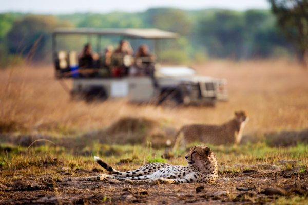 Game drives from Shumba Camp offer the opportunity to see cheetah. © Wilderness Safaris