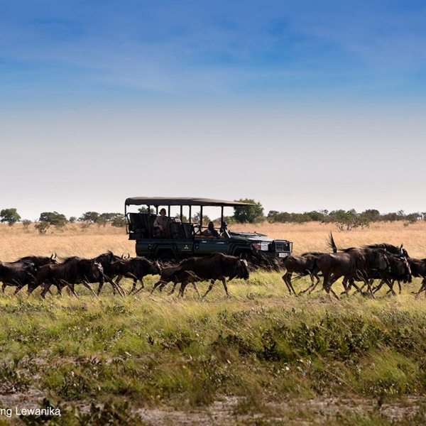 You'll love seeing the wildebeest migration from King Lewanika Lodge. © Time + Tide