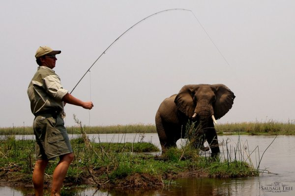 Be careful not to catch an elephant when tiger fishing in Zambia. © Sausage Tree Camp