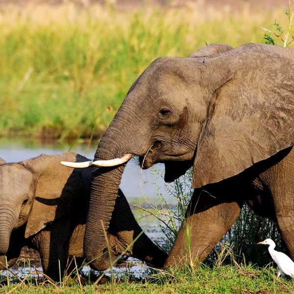 A luxury Lower Zambezi safari will let you encounter gentle elephant.