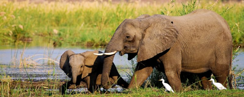 A luxury Lower Zambezi safari will let you encounter gentle elephant.