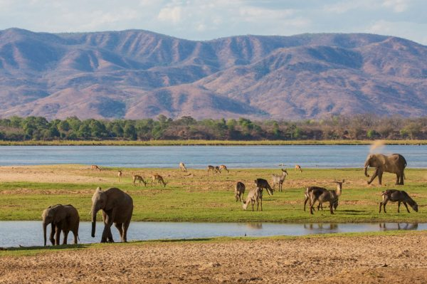 Your Zambia safari will take you to a land of wild beauty.