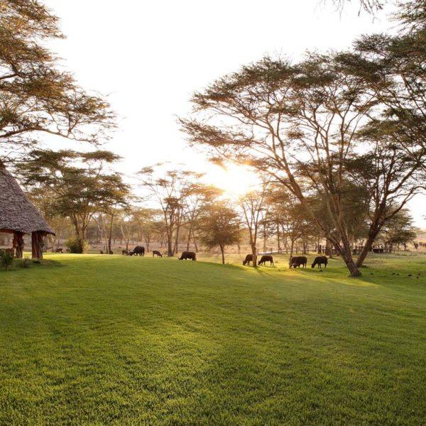 Sirikoi House is set on lush lawns.