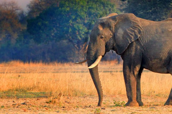 Where to go on safari in Zambia | zambia safari destinations
