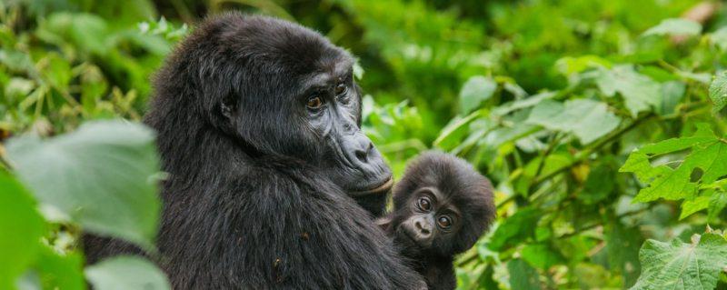 The best time to visit Uganda on safari | Art Of Safari