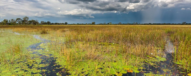 The best time to visit Botswana on safari | Art Of Safari