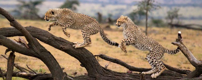 Best time to visit Kenya on safari | Art Of Safari