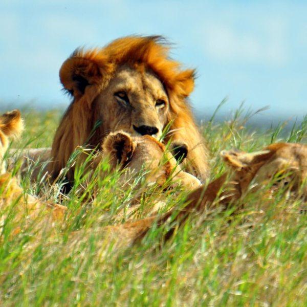 Luxury Safaris Serengeti National Park | Art Of Safari