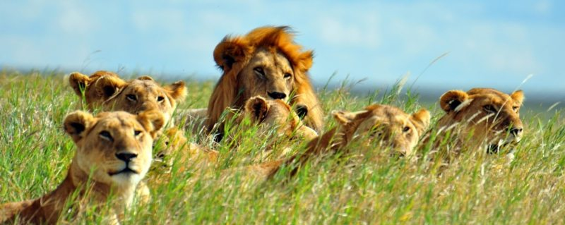 Luxury Safaris Serengeti National Park | Art Of Safari