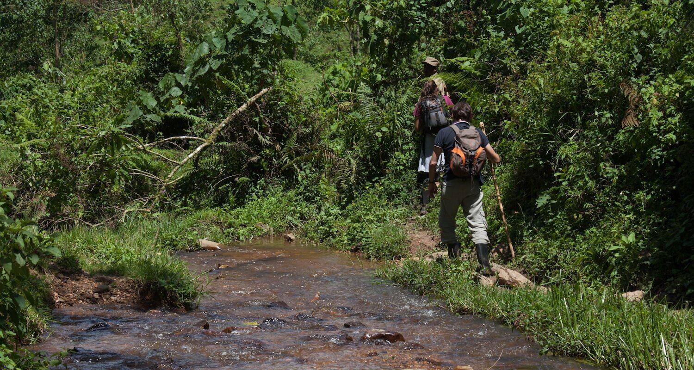Gorilla trekking is easier in Uganda's dry seasons. © Uganda Safari Company