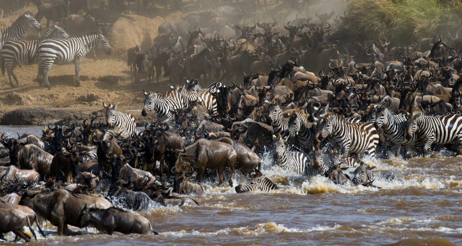 To see the Great Wildebeest Migration in Kenya, visit the Masai Mara from about August to October.