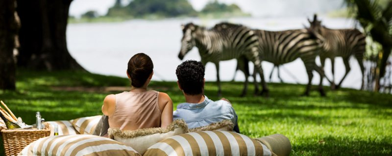 Zebra come right on to The Royal Livingstone's lawns on your honeymoon safari