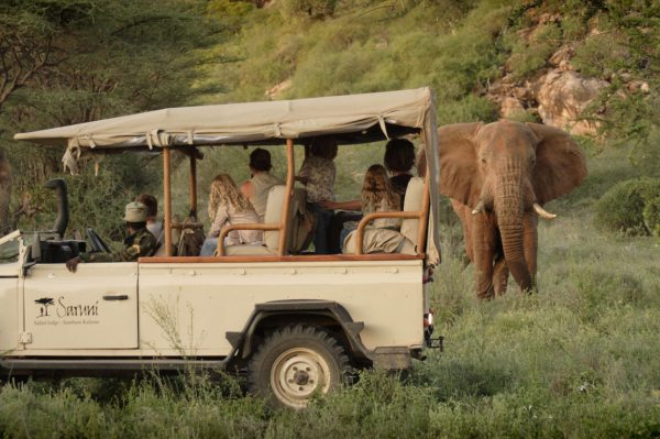 Elephant are plentiful in the northern Kenya, and you'll likely see them on your game drives from Saruni Samburu. © Saruni