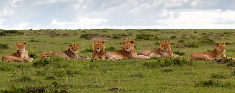 African Safari Holiday Types
