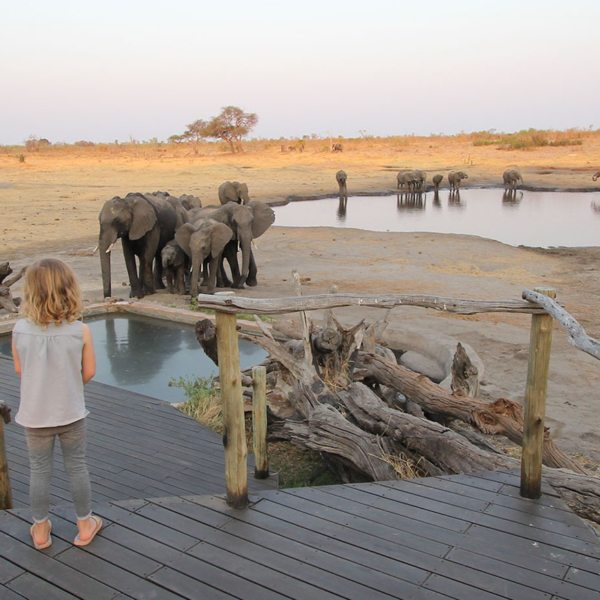 Elephants at Somalisa Acacia in Hwange National Park