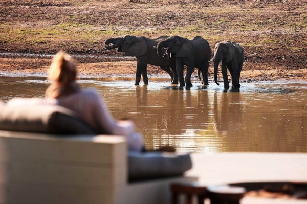 You can watch elephant right from camp at Chinzombo. © Time + Tide