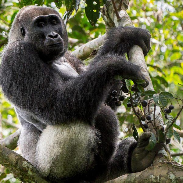 Odzala-Kokoua National Park is full of primates. © Odzala Discovery Camps