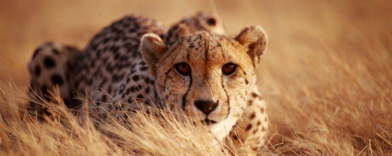 Stacey Hutchinson | Art of Safari