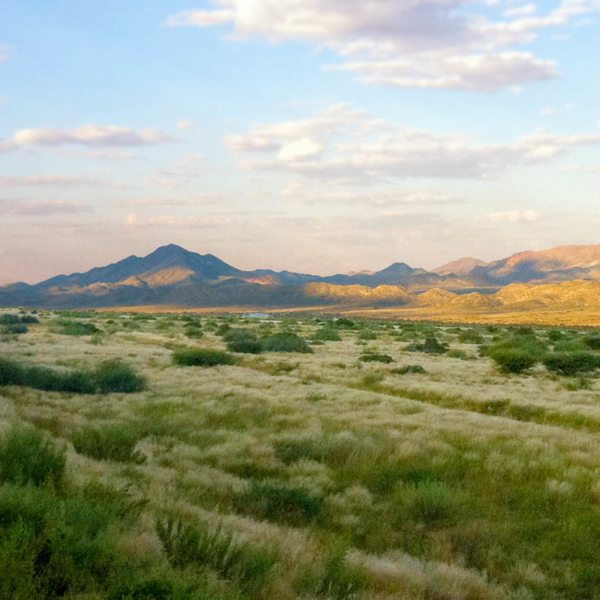 The Kalahari is a magical place, as you'll see on your luxury train safari.