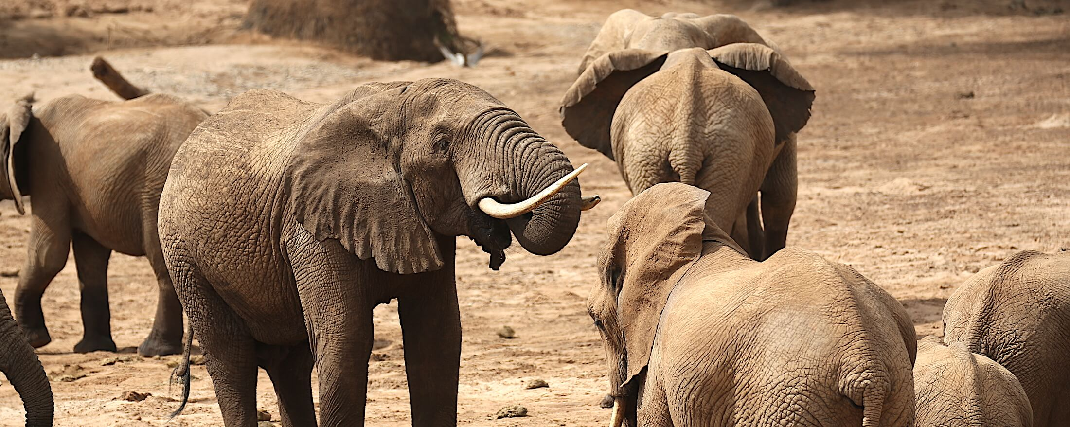 Elephants on safari in Samburu National Reserve | Art of Safari