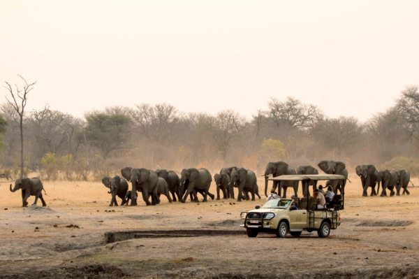 Disembark for a game drive in Hwange during your train safari. © The Hide