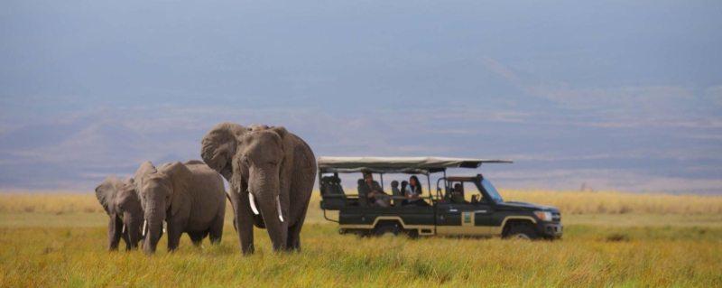 Affordable African Safaris | Art of Safari