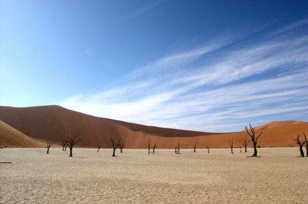 Deadvlei is dotted with fossilised trees. © Pete Dunning