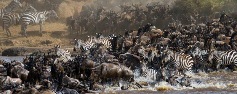 The great wildebeest migration | Art of Safari Magazine