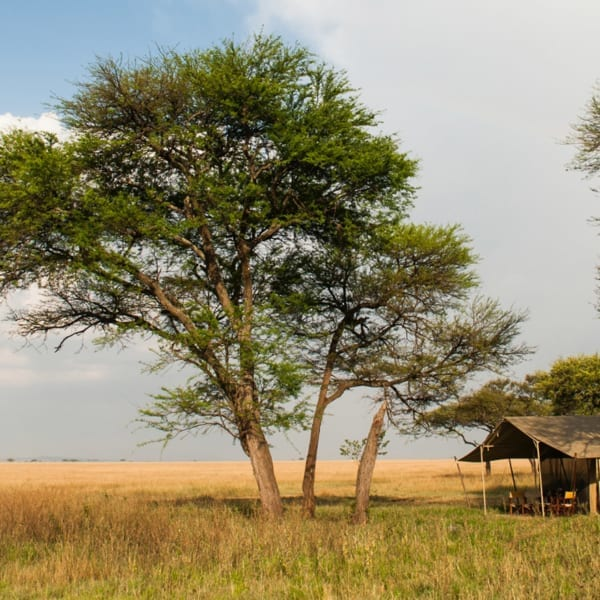 Serengeti Safari Camp moves around the Serengeti. © Nomad Tanzania