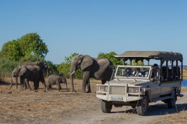 Chobe is chock-full of elephant. © Desert & Delta Safaris