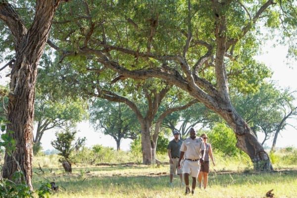 Take a guided island bush walk from Camp Okavango. © Desert & Delta Safaris