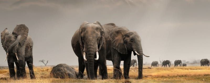 East Africa promises exceptional wildlife sightings. © Shutterstock
