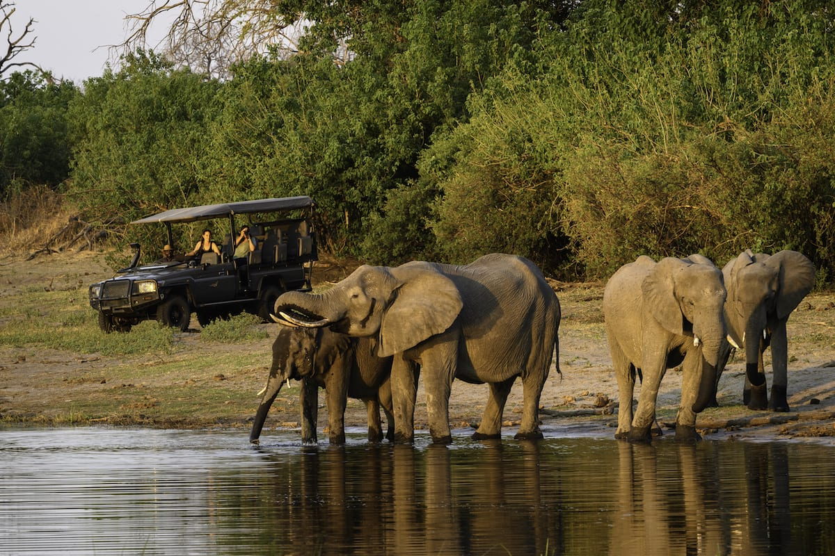 Wildlife often seek out water in the late afternoon. © Wilderness Safaris