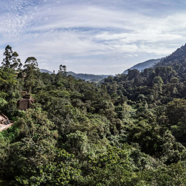 Bwindi Lodge is on the edge of Bwindi Impenetrable Forest. © Volcanoes Safaris