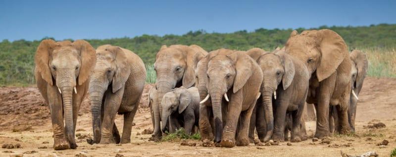 Our Top-10 African Safari Experiences   Art Of Safari