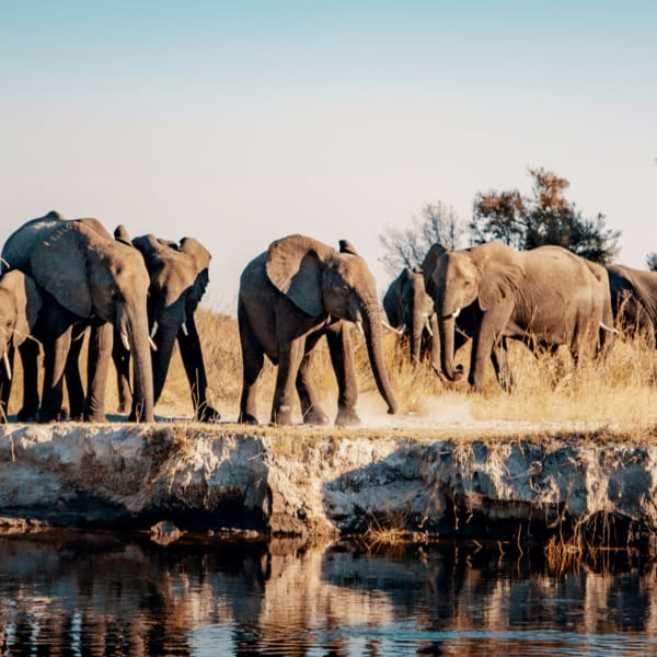 You'll see plenty of elephant on your safari in Caprivi. © Shutterstock