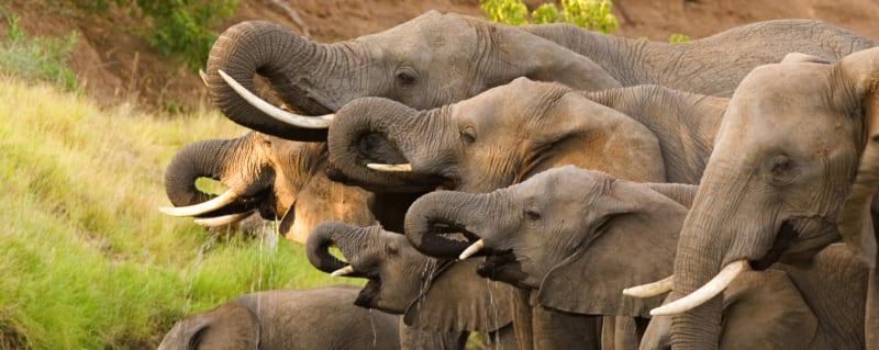 Botswana Savute Elephant