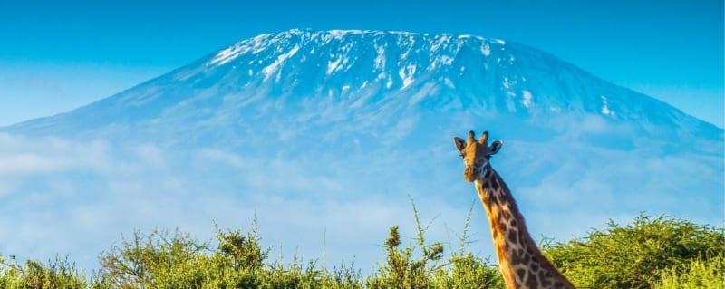Amboseli Kenya