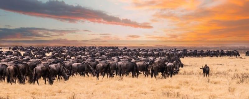Tanzania | Migration