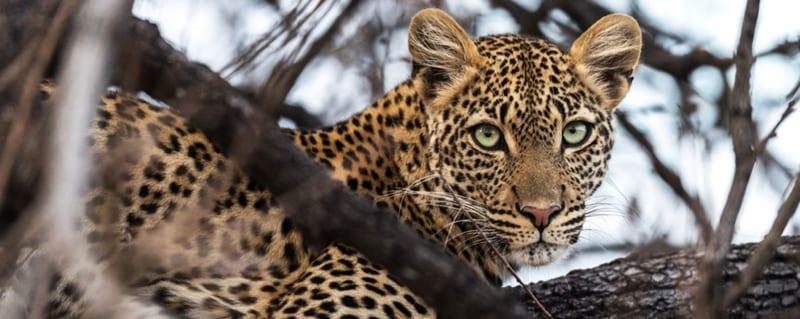 Tanzania | Ruaha National Park | Jabali Ridge