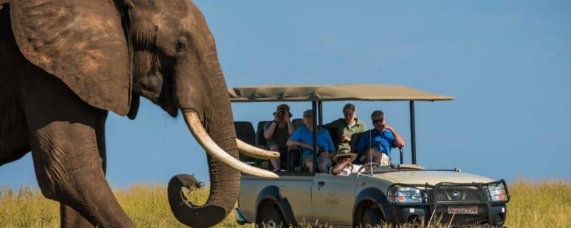 Zimbabwe - Changa Safari Camp