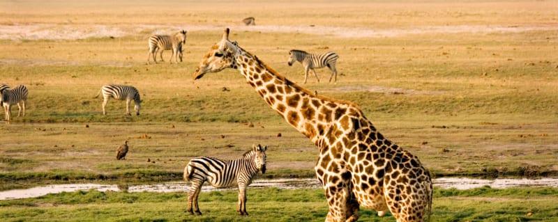 Botswana | Chobe