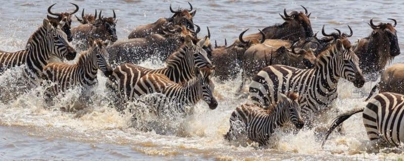 Tanzania | Wildebeest Migration