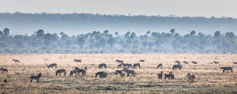 Tanzania | Chada Katavi