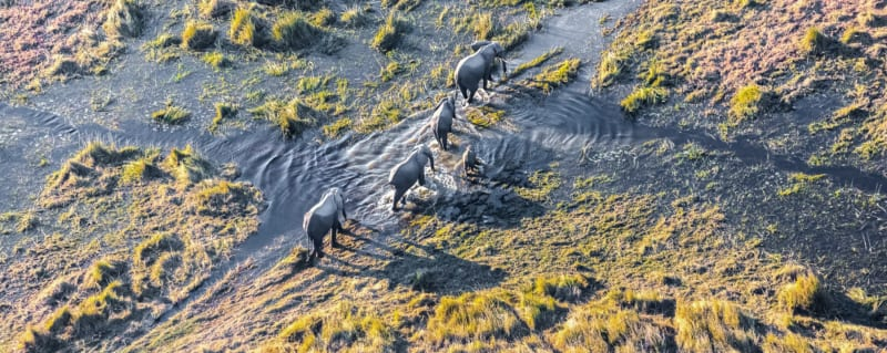 Bostwana | Okavango Delta | Elephant