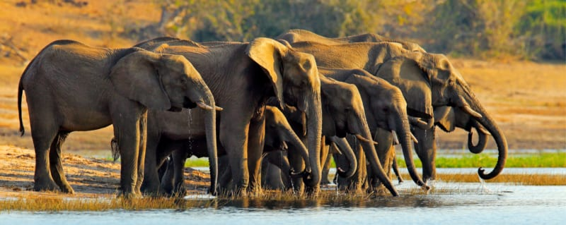 Botswana | Chobe National Park | Elephant Herd
