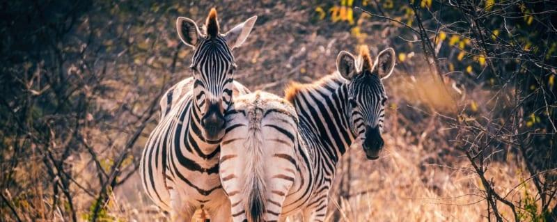 Tanzania | Serengeti
